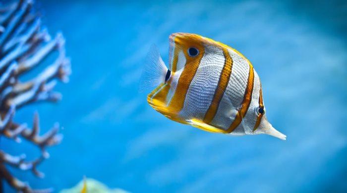 Tips για καλύτερες υποβρύχιες φωτογραφίες και βίντεο (Μέρος 1ο)