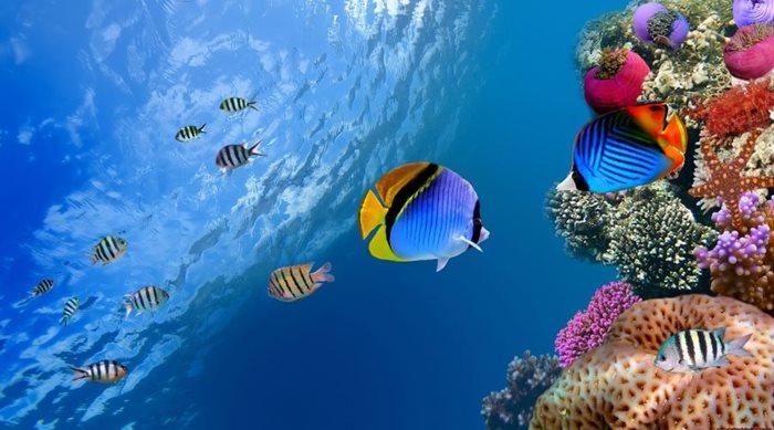 Tips για καλύτερες υποβρύχιες φωτογραφίες και βίντεο (Μέρος 2ο)